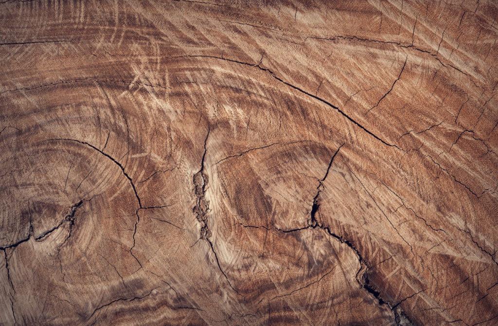 przekrój drewna